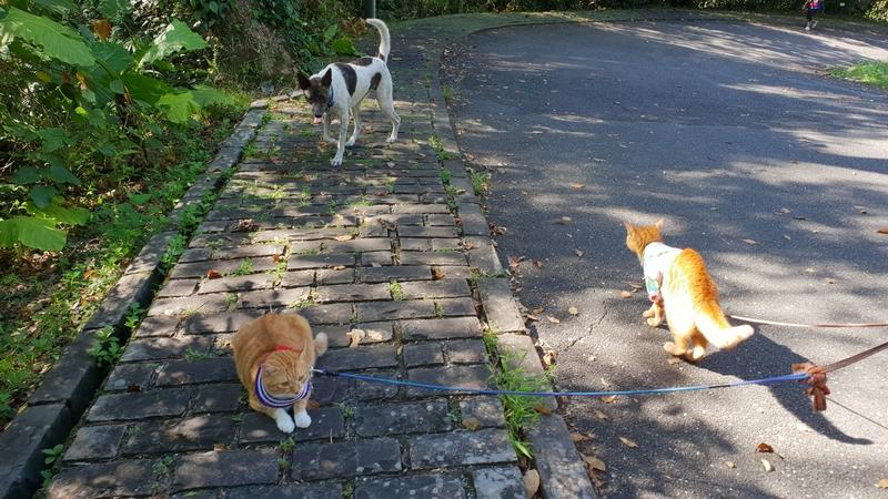 149806.jpg - 【宜蘭.冬山】免費景點推薦。仁山植物園寵物友善空間。猴子大肆出沒超可愛