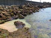 【台北】北海岸石門洞景點。美麗的貝殼砂海灘。熱門觀看夕陽&潮間帶景點:IMG_9614.JPG