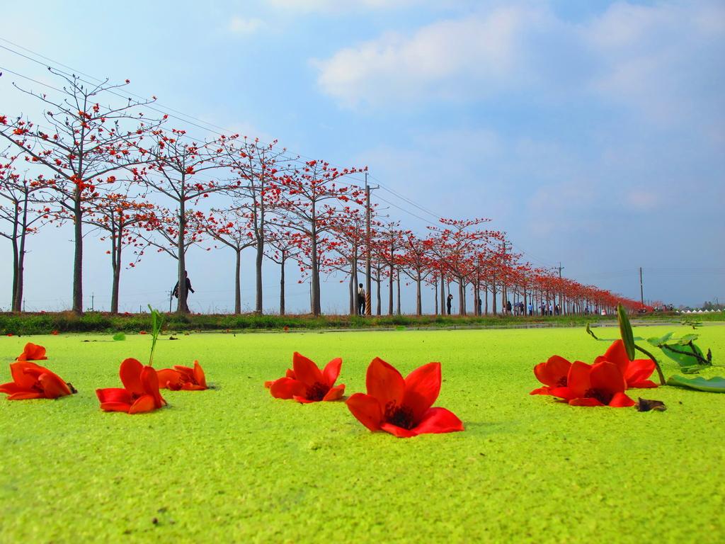 【台南】林初埤。季節限定美麗的木棉花道:IMG_9493.JPG