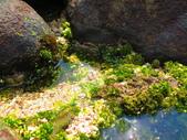 【台北】北海岸石門洞景點。美麗的貝殼砂海灘。熱門觀看夕陽&潮間帶景點:IMG_9606.JPG