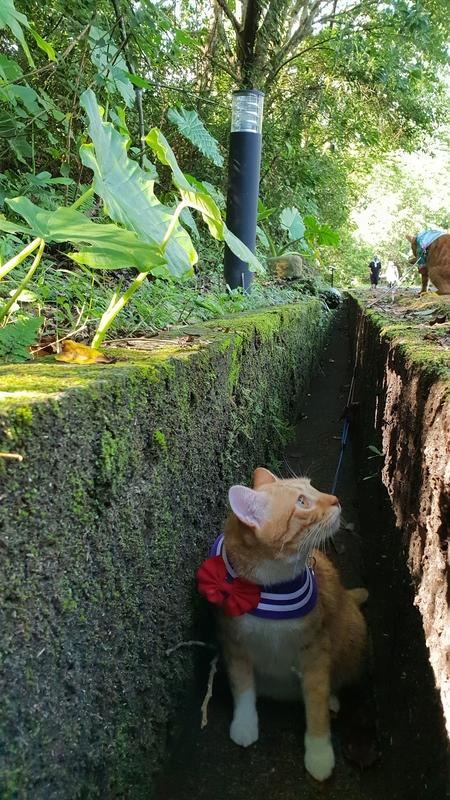 149808.jpg - 【宜蘭.冬山】免費景點推薦。仁山植物園寵物友善空間。猴子大肆出沒超可愛