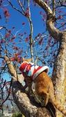 【南投.信義】1月季節限定美景。外坪頂蔡家秘境梅園。絕美水池倒影:128180.jpg