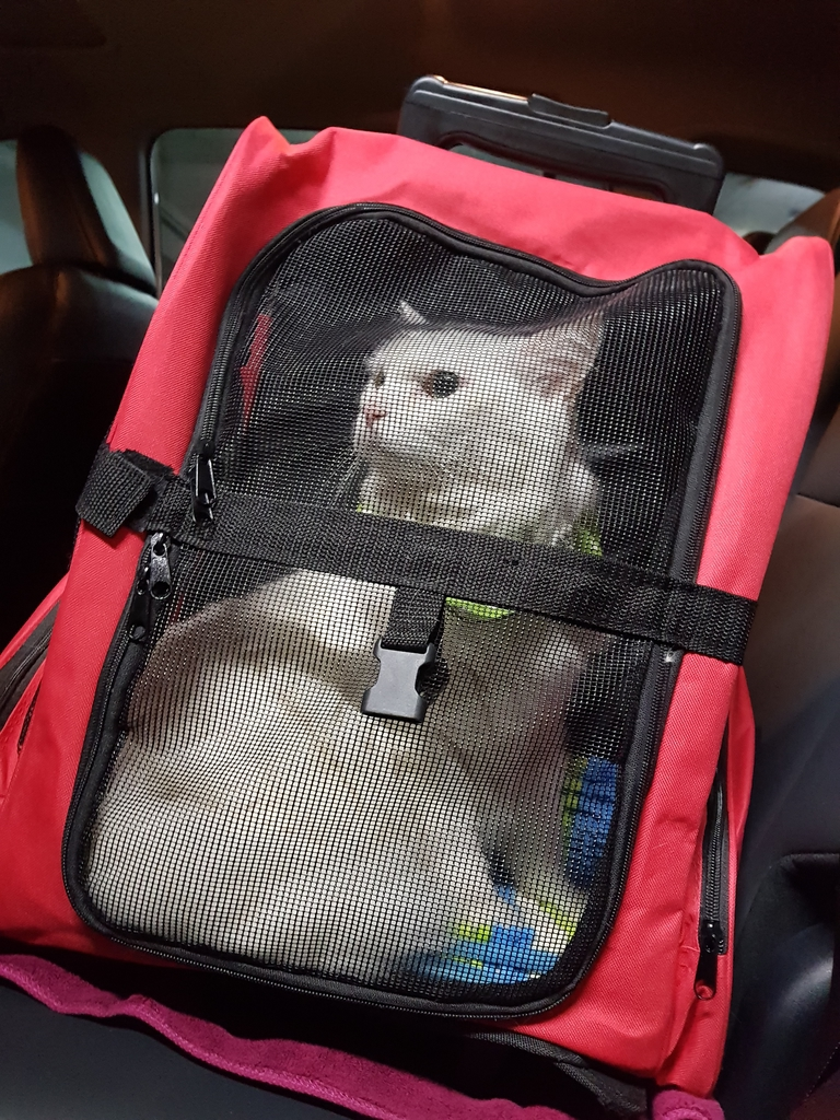 20171207_054057.jpg - 【寵物用品】貓狗外出太空背包兩款推薦(含拉桿款)。南洋峇里spa撰寫