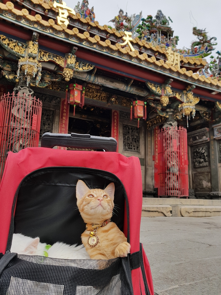 20171207_114239.jpg - 【寵物用品】貓狗外出太空背包兩款推薦(含拉桿款)。南洋峇里spa撰寫