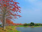 【台南】林初埤。季節限定美麗的木棉花道:IMG_9370.JPG