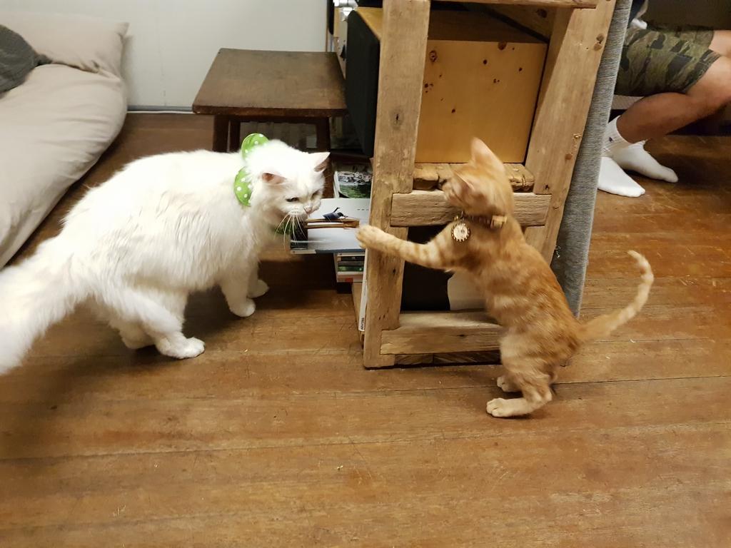 20171109_173913.jpg - 【花蓮】日式古宅遇見花&貓。咖啡花優質手做甜點。貓奴必推必到訪