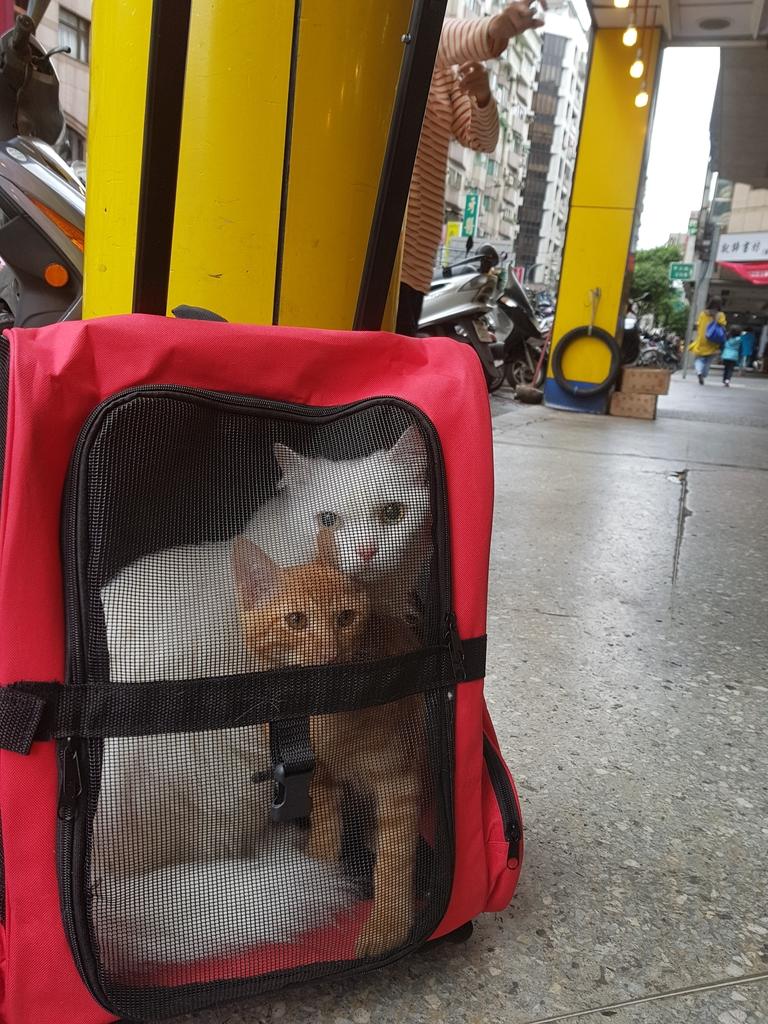 20171203_123103.jpg - 【寵物用品】貓狗外出太空背包兩款推薦(含拉桿款)。南洋峇里spa撰寫