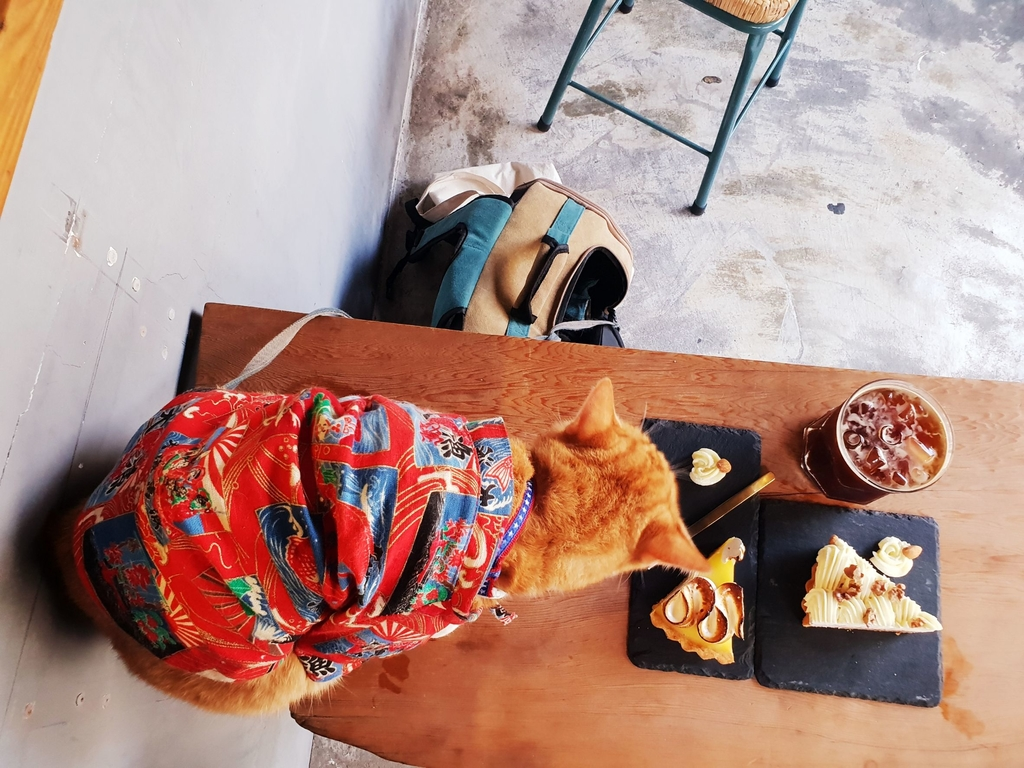 138807.jpg - 【花蓮.市區】下午茶推薦。唔子咖啡。有兩隻店貓。咖啡好喝甜點好吃不甜膩超推