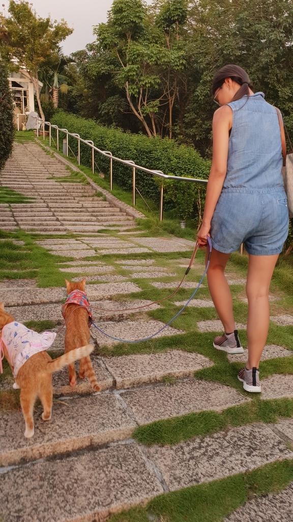 145846.jpg - 【彰化.員林】極光森林寵物友善餐廳。可觀看夜景+高鐵+超唯美帳篷包廂