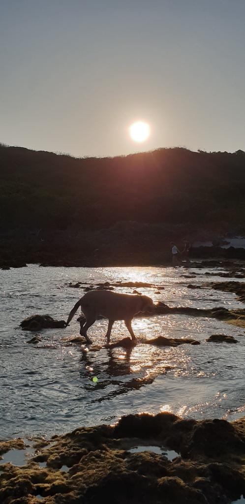 241297.jpg - 【屏東.恆春】小峇里島岩。記得帶肉泥。可以享受被貓咪包圍的感覺。這裡夕陽超美麗