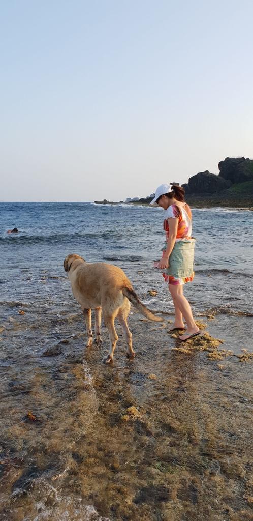 241298.jpg - 【屏東.恆春】小峇里島岩。記得帶肉泥。可以享受被貓咪包圍的感覺。這裡夕陽超美麗