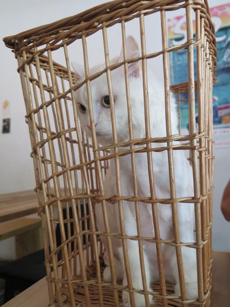 IMG_2804.JPG - 【台北.天母】芝山站下午茶推薦。我思.私宅甜點 w.a.s house溫馨手做甜點。歡迎貓咪寵物進入