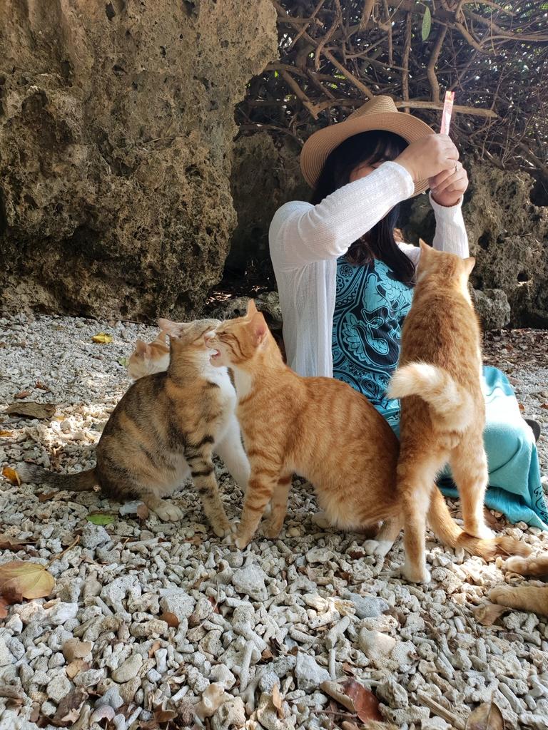 241265.jpg - 【屏東.恆春】小峇里島岩。記得帶肉泥。可以享受被貓咪包圍的感覺。這裡夕陽超美麗