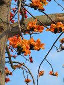 【台南】林初埤。季節限定美麗的木棉花道:IMG_9386.JPG