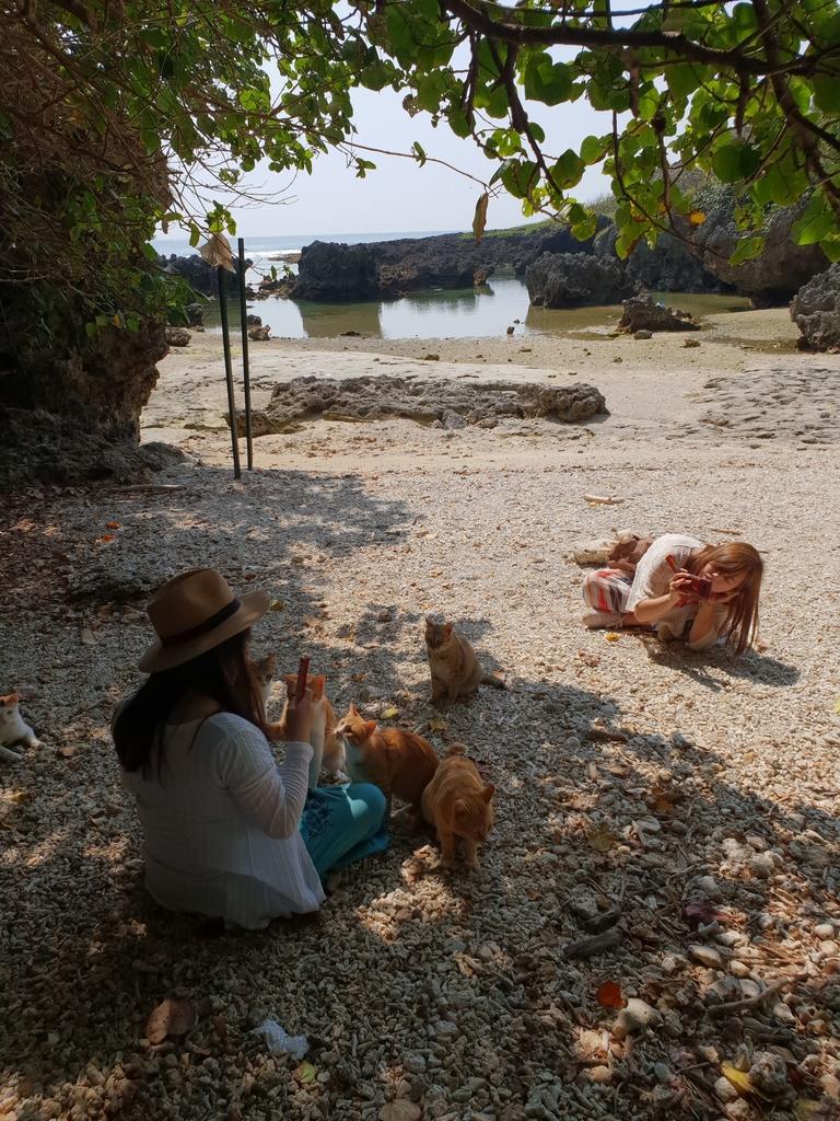 241266.jpg - 【屏東.恆春】小峇里島岩。記得帶肉泥。可以享受被貓咪包圍的感覺。這裡夕陽超美麗