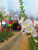 【台南】學甲蜀葵花盛開。季節限定版美麗花景:IMG_9696.JPG