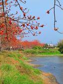 【台南】林初埤。季節限定美麗的木棉花道:IMG_9380.JPG