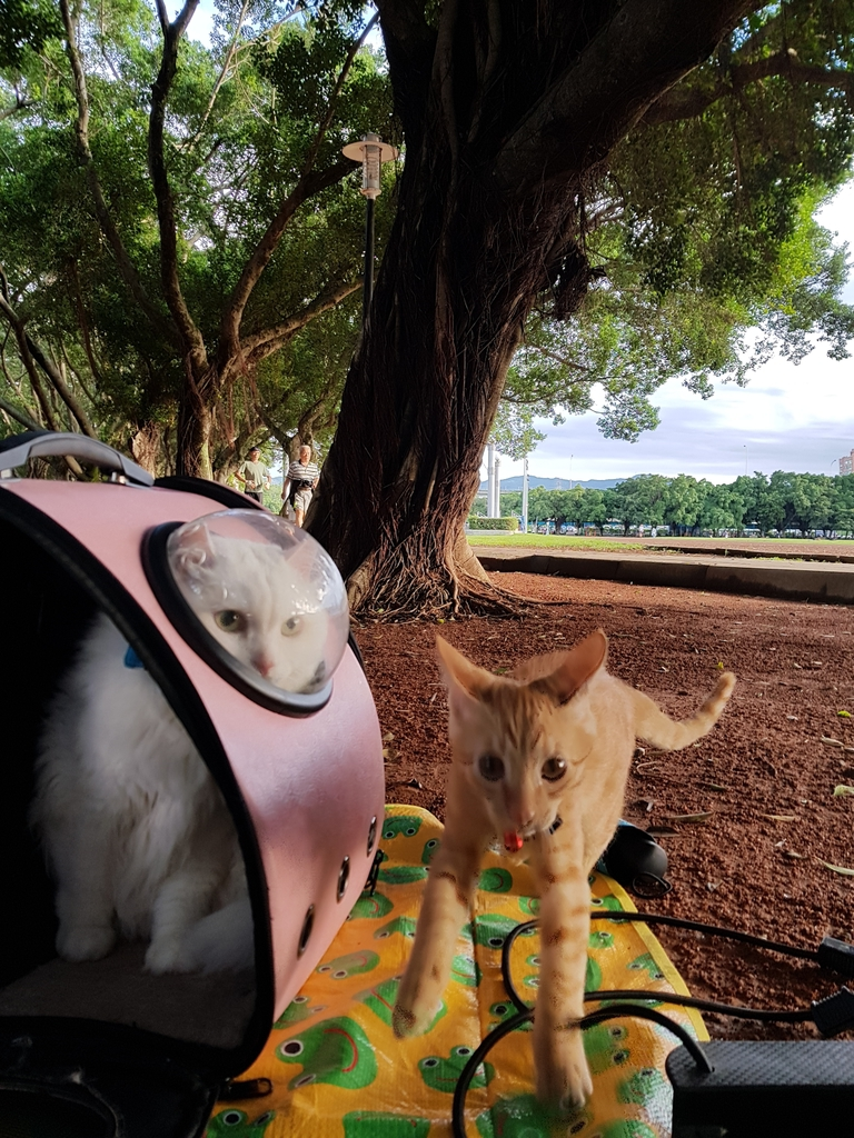 20171121_153759.jpg - 【寵物用品】貓狗外出太空背包兩款推薦(含拉桿款)。南洋峇里spa撰寫