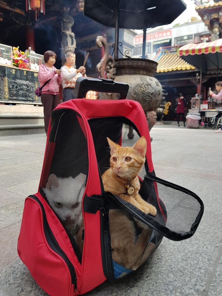 20171207_112819.jpg - 【寵物用品】貓狗外出太空背包兩款推薦(含拉桿款)。南洋峇里spa撰寫