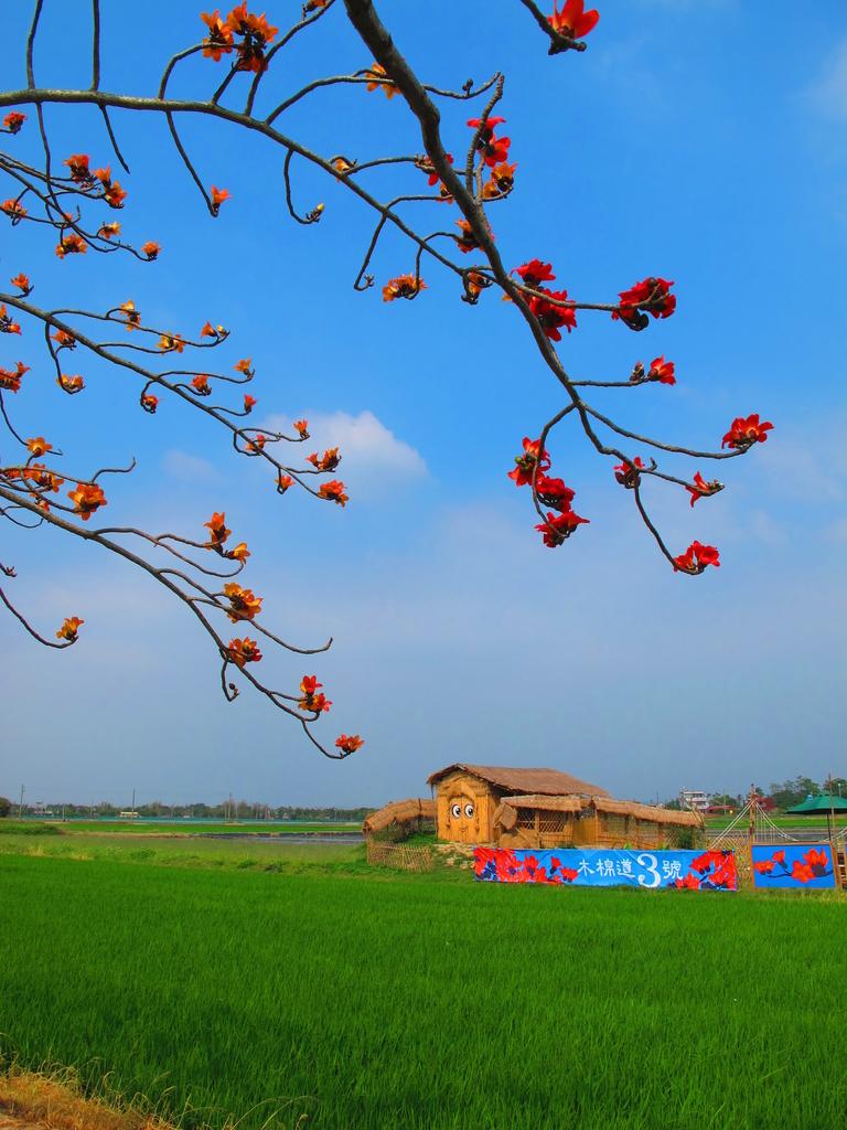 【台南】林初埤。季節限定美麗的木棉花道:IMG_9460.JPG