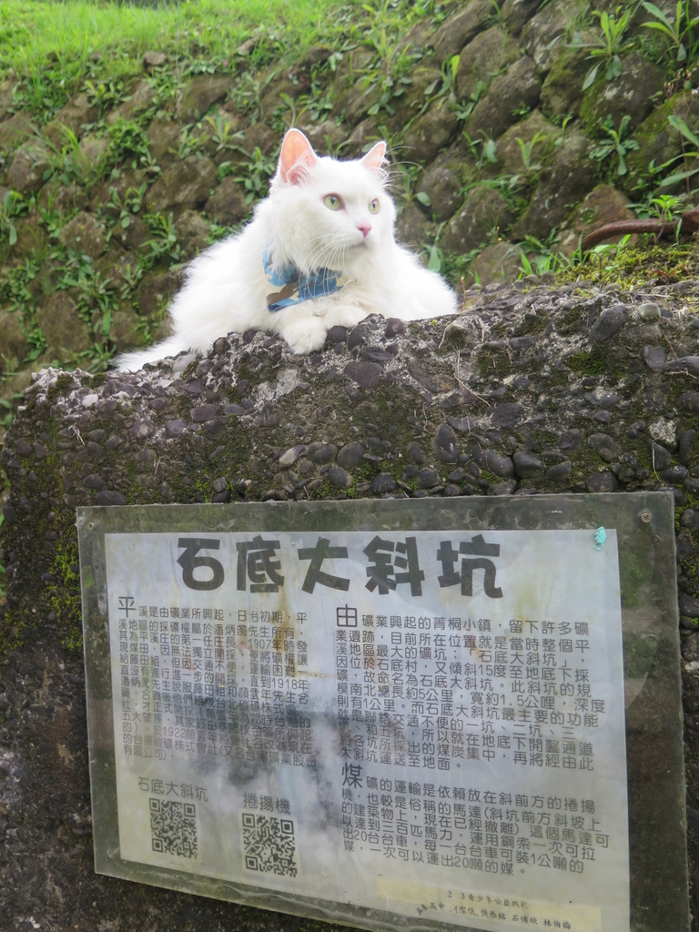 IMG_1620.JPG - 【台北.平溪】平溪小祕境。偶像劇妹妹拍攝地。石底大斜坑拍寵物寫真球球篇