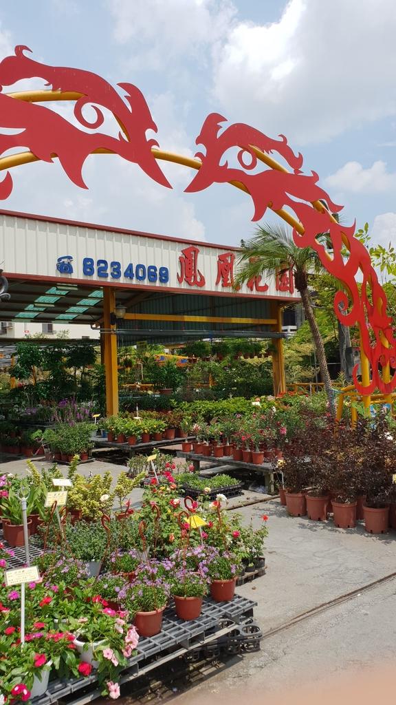 145587.jpg - 【彰化.田尾】鳳凰花園&窄巷咖啡。田尾最美麗花園植物種類超多推薦。低消100水果免費吃
