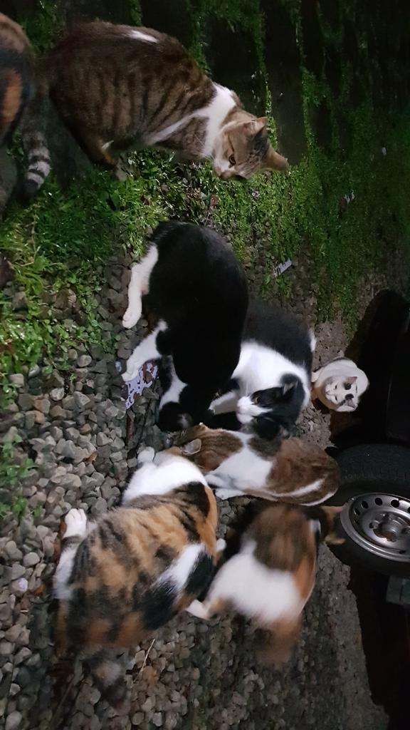 20181018_182752.jpg - 【嘉義】阿里山鄒族部落。阿古亞納花園民宿。名符其實的貓村友善寵物住宿