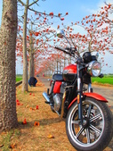 【台南】林初埤。季節限定美麗的木棉花道:IMG_9475.JPG