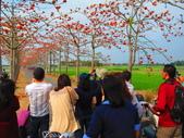 【台南】林初埤。季節限定美麗的木棉花道:IMG_9516.JPG