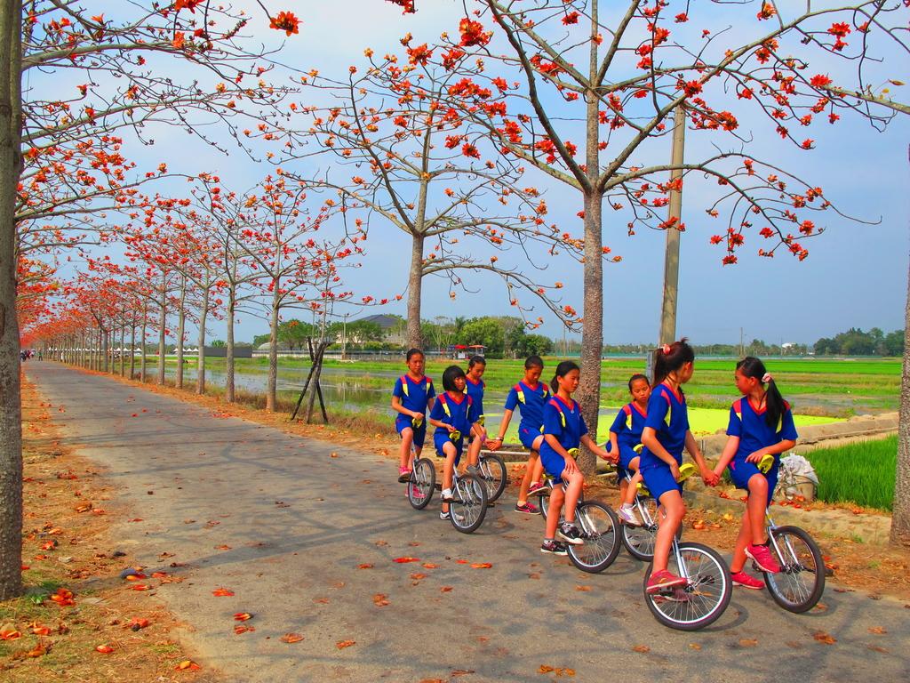 【台南】林初埤。季節限定美麗的木棉花道:IMG_9509.JPG