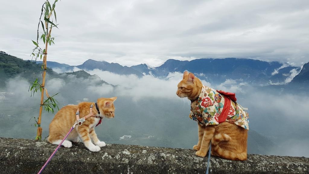 20181019_100743.jpg - 【嘉義】阿里山鄒族部落。阿古亞納花園民宿。名符其實的貓村友善寵物住宿
