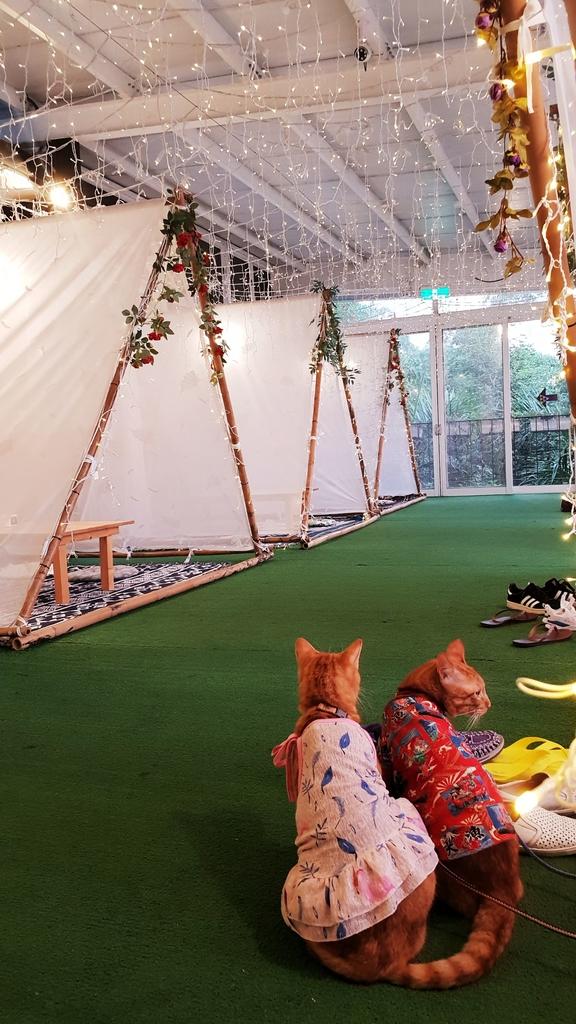 145838.jpg - 【彰化.員林】極光森林寵物友善餐廳。可觀看夜景+高鐵+超唯美帳篷包廂