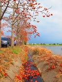 【台南】林初埤。季節限定美麗的木棉花道:IMG_9528.JPG