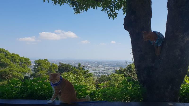 149799.jpg - 【宜蘭.冬山】免費景點推薦。仁山植物園寵物友善空間。猴子大肆出沒超可愛