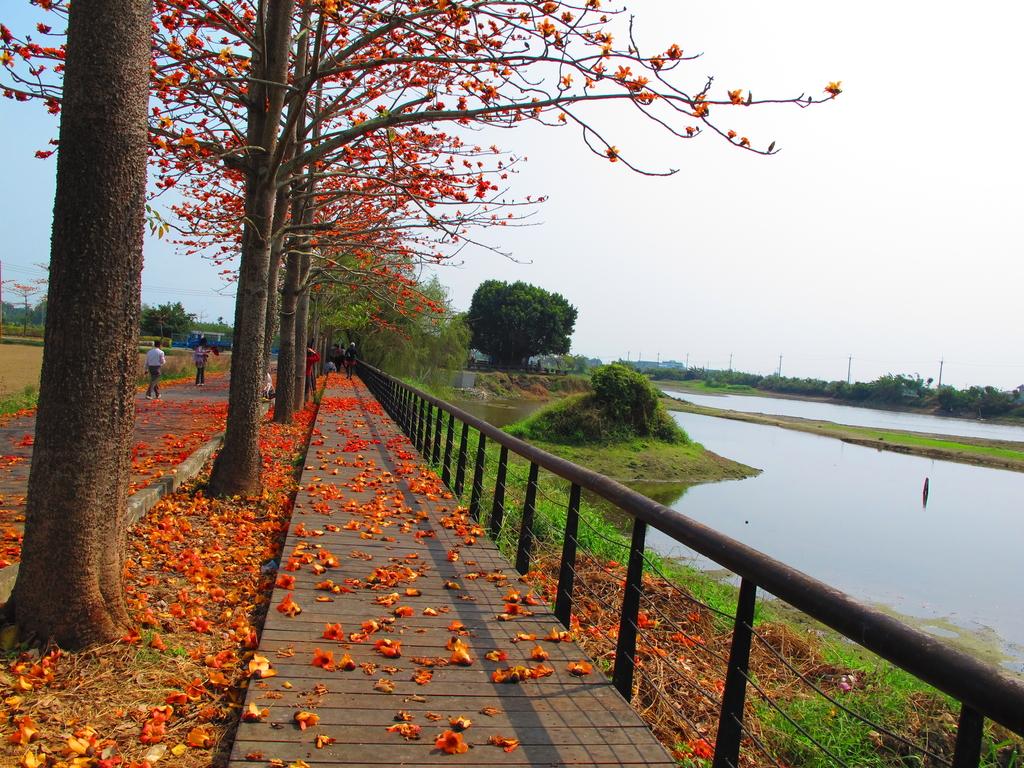 【台南】林初埤。季節限定美麗的木棉花道:IMG_9429.JPG
