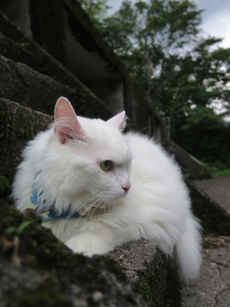 IMG_1662.JPG - 【台北.平溪】平溪小祕境。偶像劇妹妹拍攝地。石底大斜坑拍寵物寫真球球篇