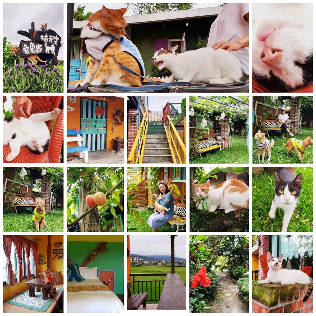 114042.jpg - 【宜蘭.三星】貓天空寵物民宿。這裡有十隻貓.兩隻狗.六隻雞。一個溫馨又溫暖的好地方。早餐下午茶超彭湃