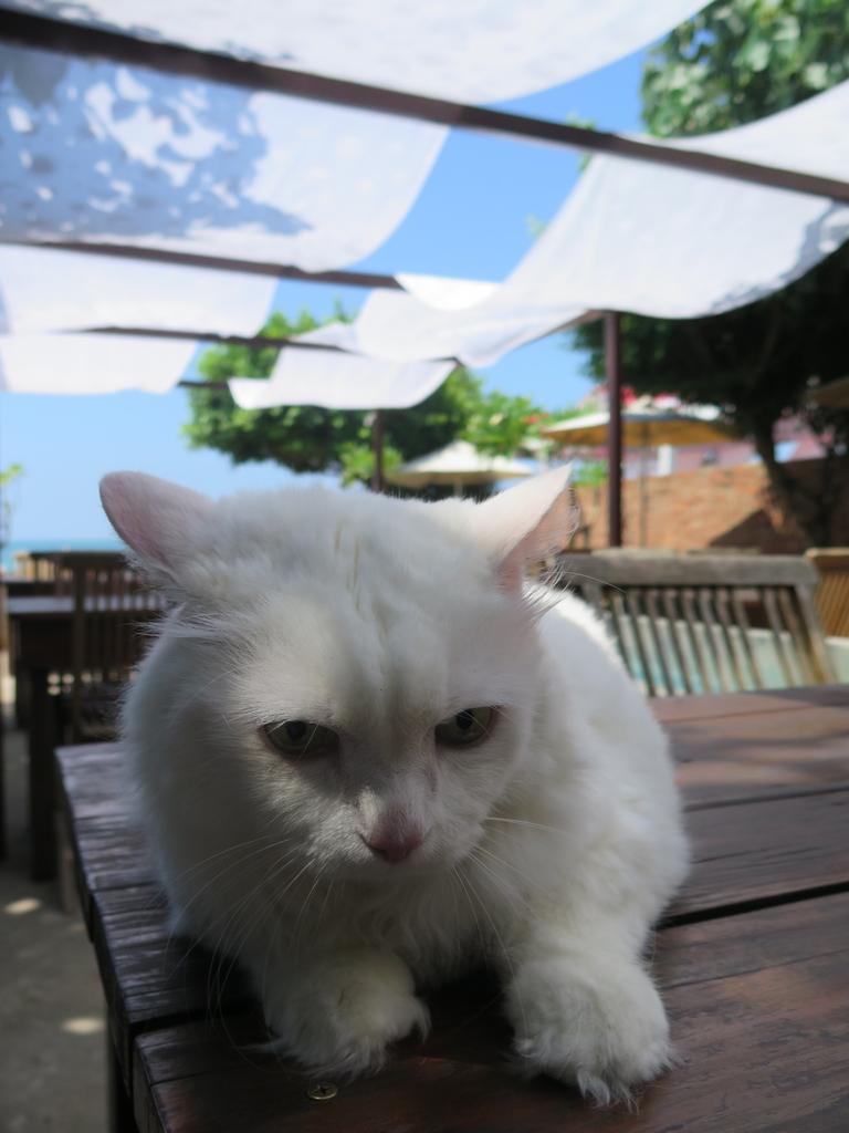IMG_5645.JPG - 【台北】北海岸海景餐廳推薦。Villa sugar 義大利麵.咖啡.冰沙.鬆餅