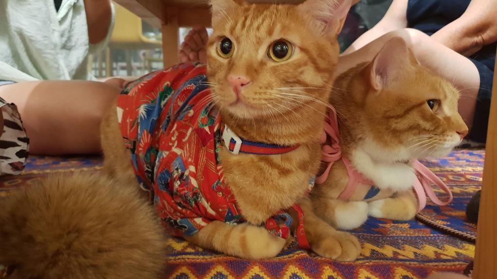 145825.jpg - 【彰化.員林】極光森林寵物友善餐廳。可觀看夜景+高鐵+超唯美帳篷包廂