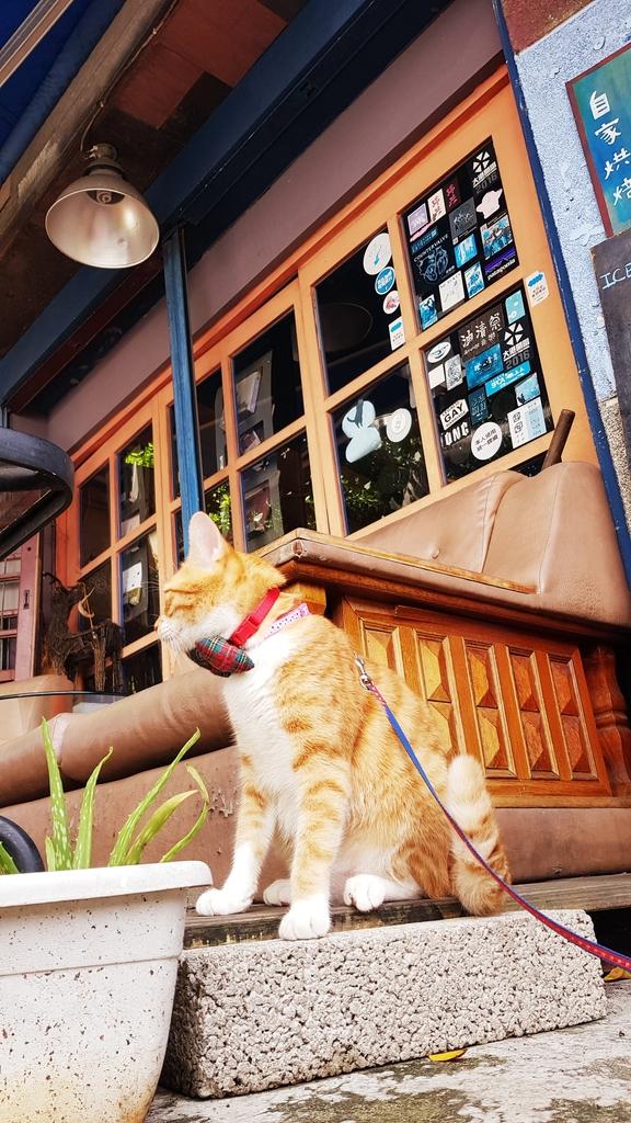 20190823_142841.jpg - 【台北.天母】午餐.晚餐下午茶推薦。ZABU老屋咖啡廳迷人的復古氣息。友善寵物咖啡廳