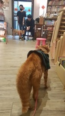 【中和.永和】智光商職巷弄中。文青二手書店。店狗好可愛的綠書店:20191101_144657.jpg