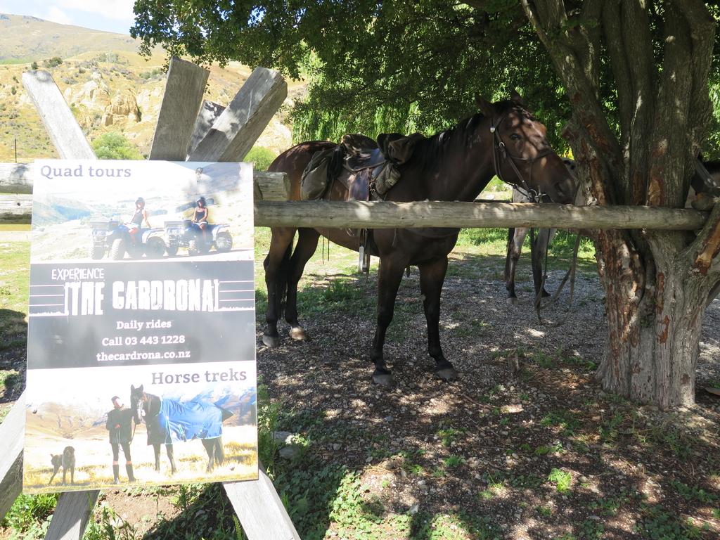 IMG_6199.JPG - 【紐西蘭.南島】2017騎馬體驗。Wanaka。MTCARDRONA STATION教練超美