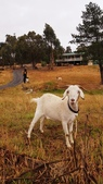 【澳洲.墨爾本】2019住宿推薦。Wirraway Farm Stay超美麗農場景致:70362537_3102174963186897_6987936559668396032_n.jpg