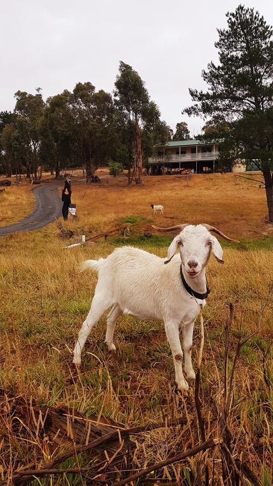70362537_3102174963186897_6987936559668396032_n.jpg - 【澳洲.墨爾本】2019住宿推薦。Wirraway Farm Stay超美麗農場景致