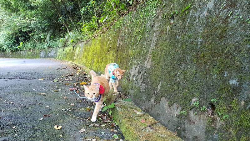 149809.jpg - 【宜蘭.冬山】免費景點推薦。仁山植物園寵物友善空間。猴子大肆出沒超可愛