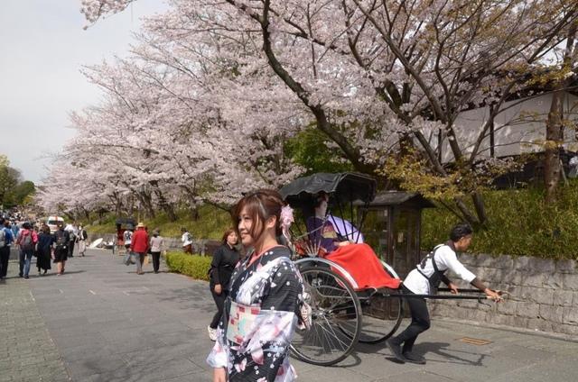 1DSC_0799.jpg - 20160406-和櫻和服體驗、清水寺、祇園夜櫻