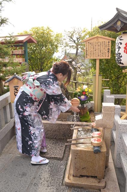DSC_0908.JPG - 20160406-和櫻和服體驗、清水寺、祇園夜櫻