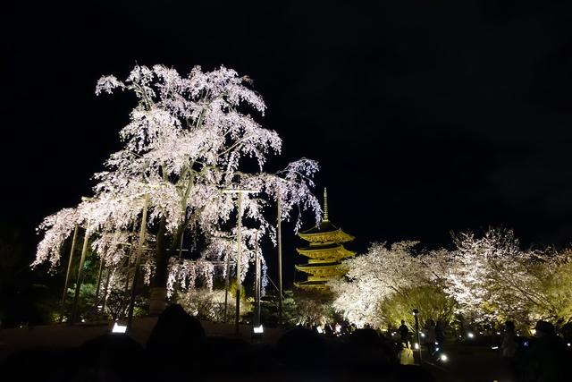 DSC00893.JPG - 20160404奈良東大寺、東寺夜櫻