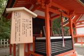 0405_伏見稻禾、鴨川、金閣寺、平野神社:DSC_0485.JPG