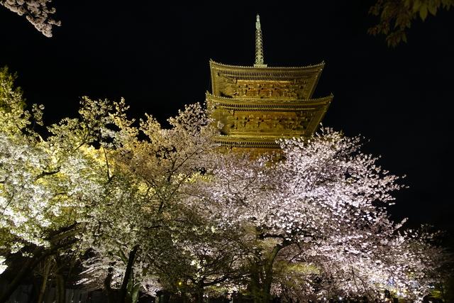 DSC00923.JPG - 20160404奈良東大寺、東寺夜櫻